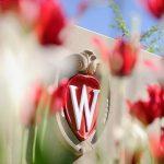 UW-Madison Crest and flowers